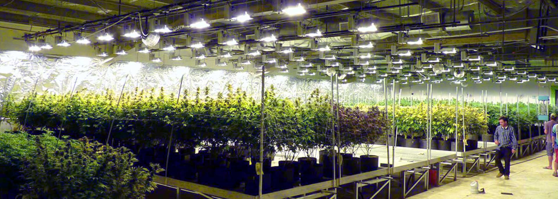 Airius-Horticultural-LED-Lighting-2