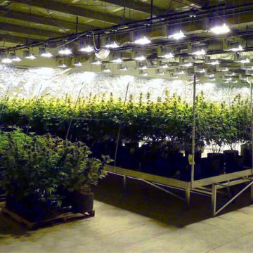 Horticultural-LED-Lighting-From-Airius-1