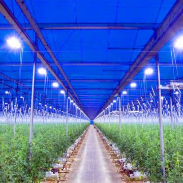 Horticultural-LED-Lighting-From-Airius-4